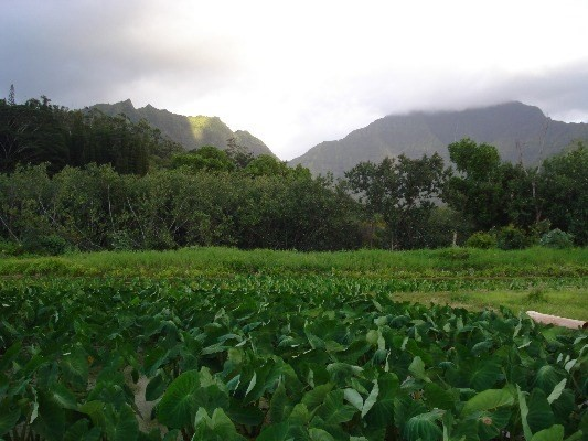 Beautiful Mountain View in Hanalei Vacant land